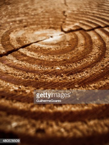 Old tree rings cracked in middle : Stock Photo