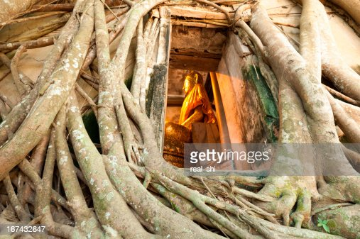 Old tree root : Stock Photo