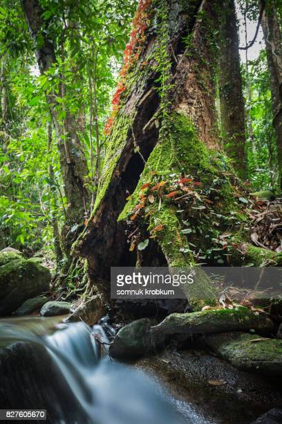 Old trunk with green moss and rainy plant in rainy season