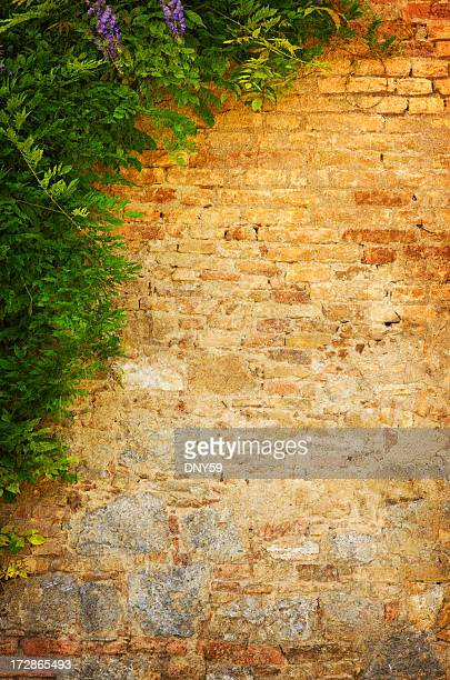 Vecchio muro
