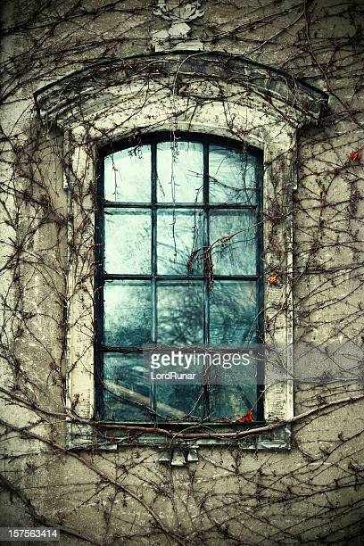Old window and vines