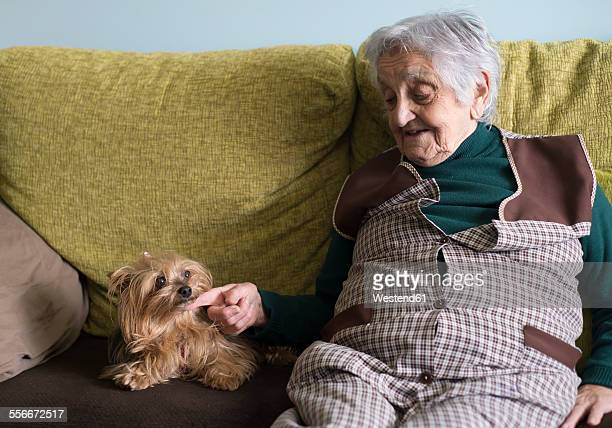 Old woman petting a yorkshire terrier