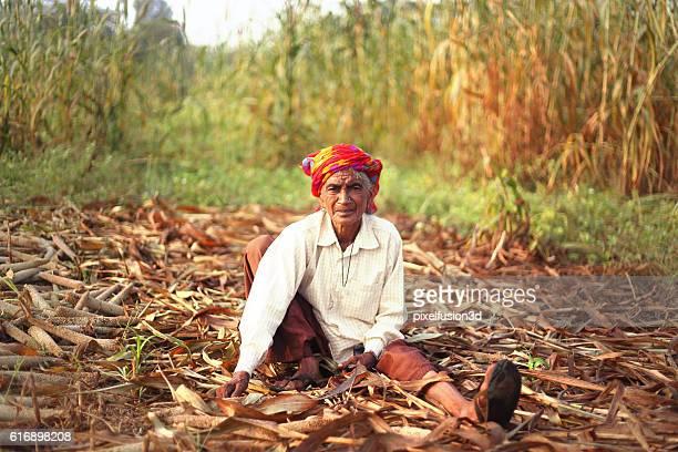Old women working in millet crop field