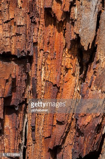Old wooden and rusty texture : Foto stock