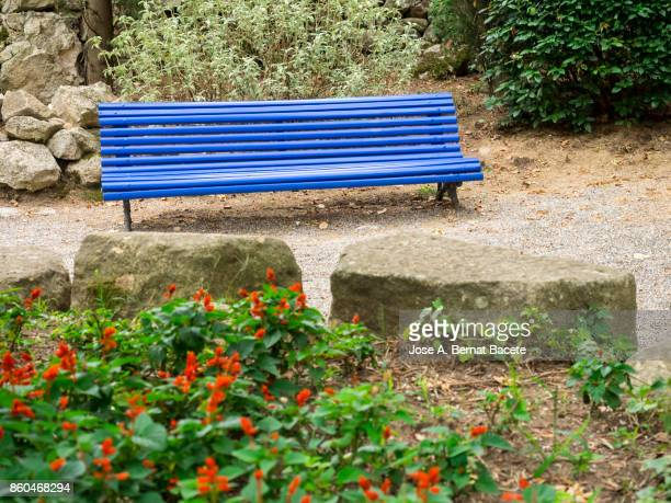 Old wooden bench in a public park, with a wall full of green leaves of a creeper plant, in the city of Girona. Catalonia
