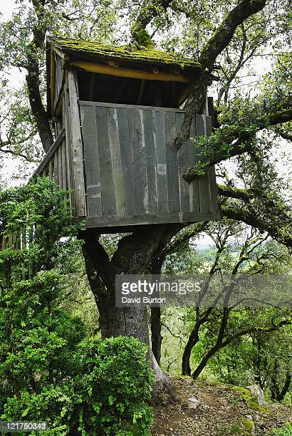 Old wooden tree house in mature tree