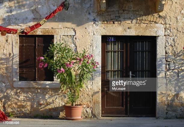 Oleander Flower in Bloom in Flowerpot Istria Croatia