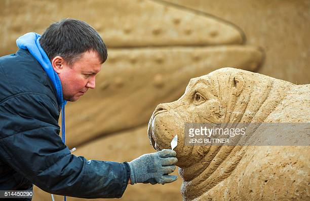 Oleg Masalitin from the Ukraine carves a walrusshaped sand sculpture on March 9 2016 in Binz on the Baltic Sea island of Ruegen northeastern Germany...