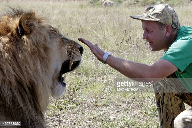 Oleg Zubkov creator of the safari park Taygan gestures to a lion in the park near the city of Belogorsk in Crimea on July 26 2014 About 50 African...