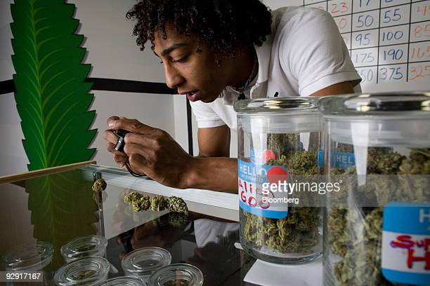 TK Olivari uses a microscope to photograph a bud of medical marijuana at the Highland Health medical dispensary and wellness center in Denver...