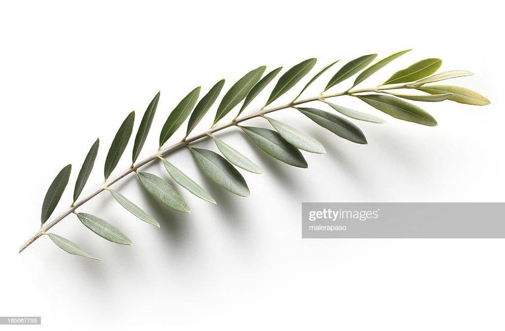 Olive branch. Peace Symbol.