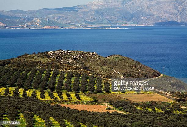 Olive groves with the sea in the background West Crete Greece