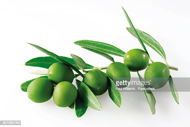 Olive leaves and green olives