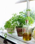 Olive oil and herbs on windowsill