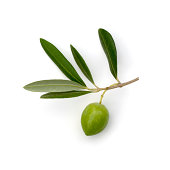 Olive BranchOther images in this series: