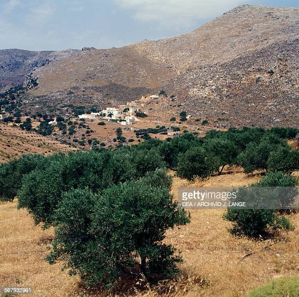Olive trees near Kelaria village Crete Greece