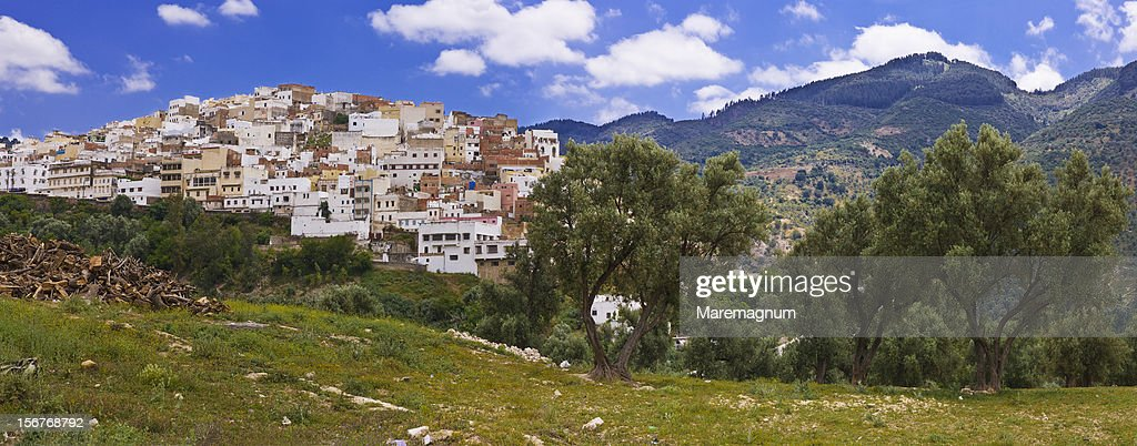 Olive trees near the village : Stock Photo