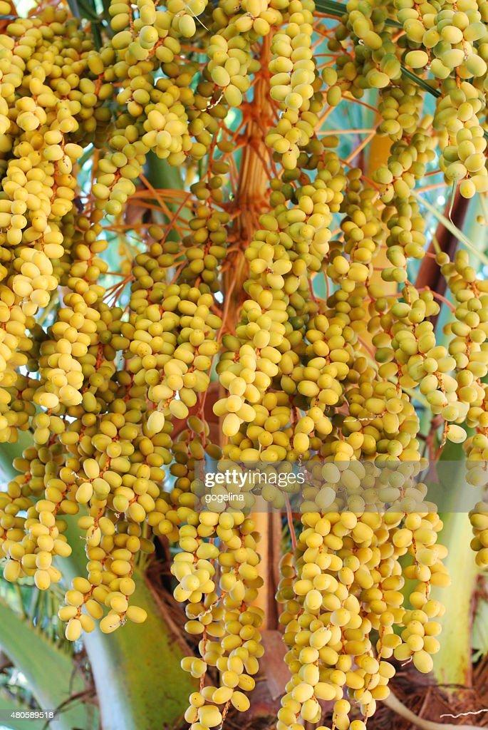 Olives : Stock Photo