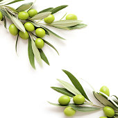green olives branch on white background. copy space