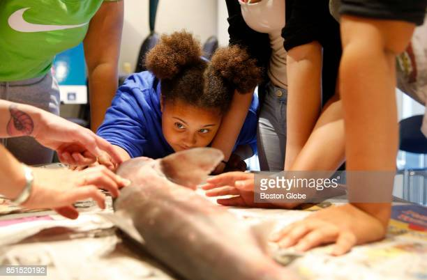 Olivia Ivy of Malden center gets an up close look at a dogfish shark as she and other girls gather with female scientists to dissect a dogfish shark...