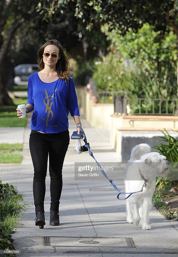 <a gi-track='captionPersonalityLinkClicked' href=/galleries/search?phrase=Olivia+Wilde&family=editorial&specificpeople=235399 ng-click='$event.stopPropagation()'>Olivia Wilde</a> is seen walking her dog on February 20, 2014 in Los Angeles, California.