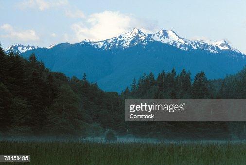 Olympic National Park , Mt. Olympus , Washington