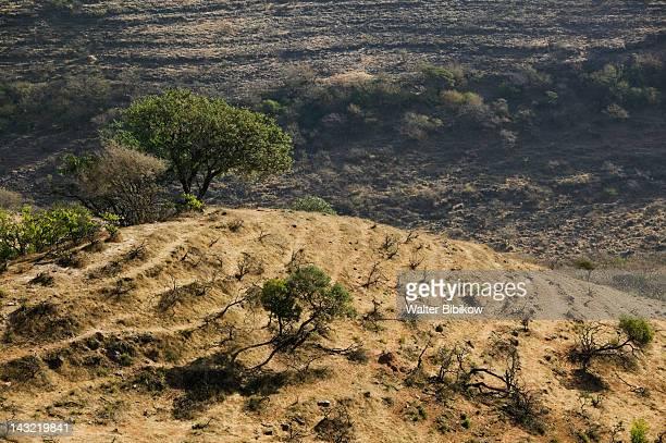 OMAN-Dhofar Region-Salalah (Area): Dhofar Mountains