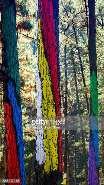Oma's painted forest