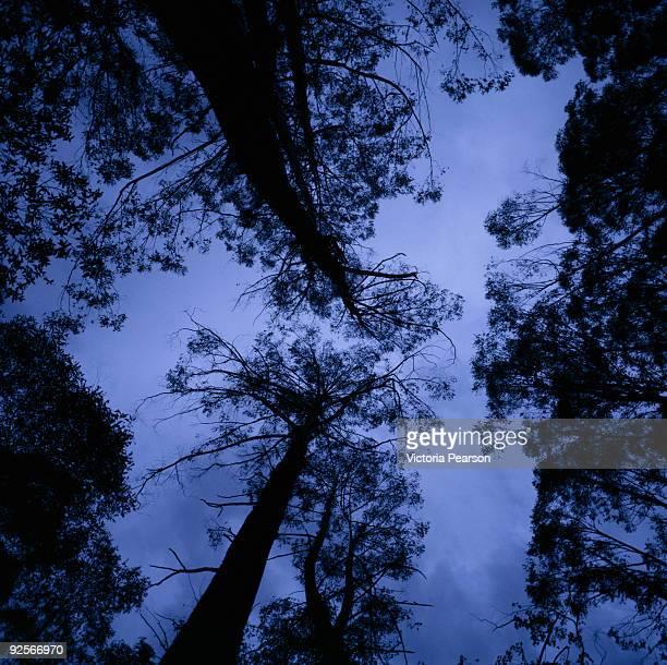 Ominous trees