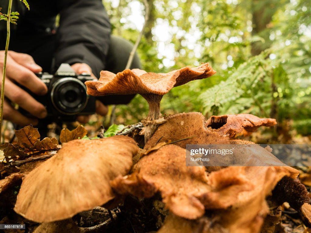 Autumn and mushroom season in The Netherlands