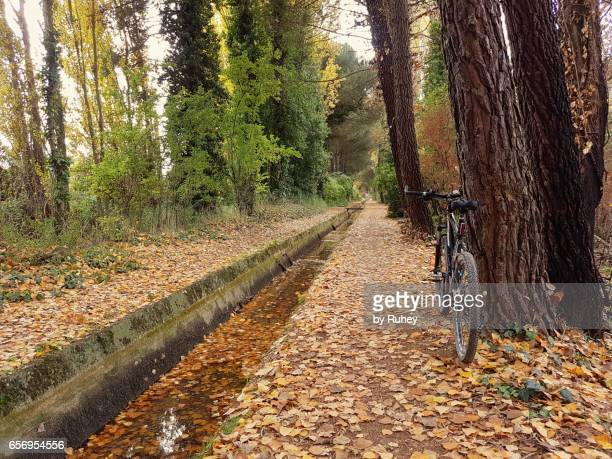MTB on a road full of leaves in autumn