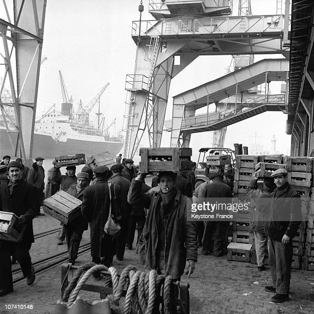 On Marseille Harbour Dockers At Work In 1955