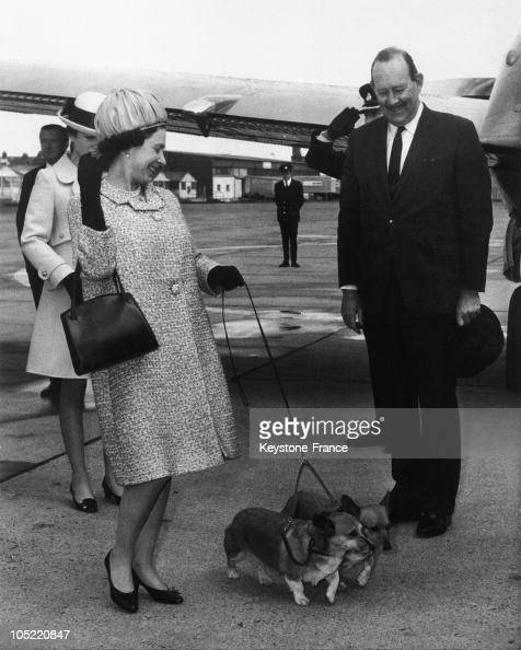 On May 20 The Queen Of England Elizabeth Ii With Her Two Dogs Corgis On The Runway Of The Airport Of London Behind Her Princess Anne