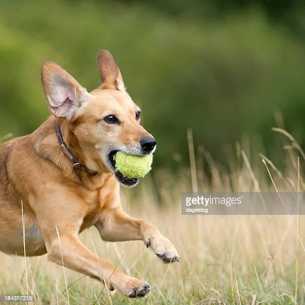 Sur le ballon