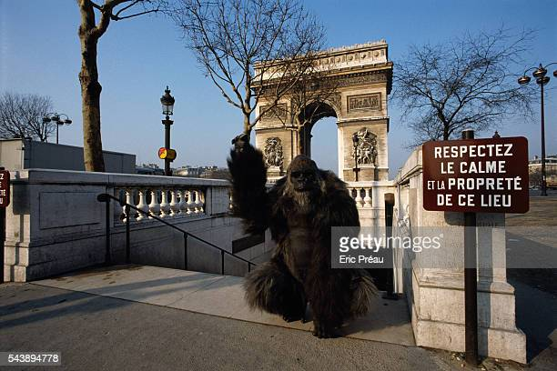 On the Champs Elysees with the Arc the Triomphe in the background French Special Effects artist Jacques Gastineau created a fake gorilla for an...
