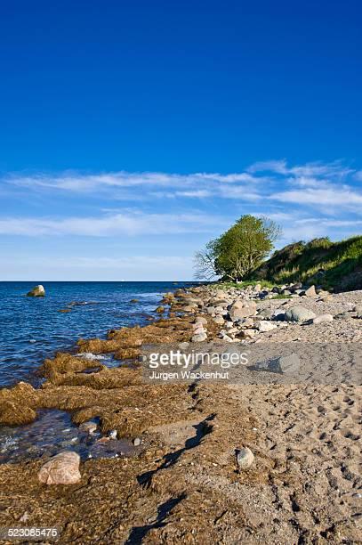 On the coastal cliffs of Staberhuk, Fehmarn Island, Baltic Sea, Schleswig-Holstein, Germany, Europe
