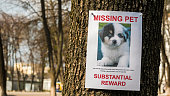 On the tree hangs the announcement of the missing puppy.