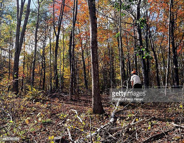 On Tuesday October 15 Tom Hoerth Bath City Arborist and Tree Warden cuts up a felled White Birch in the Butler Head Preserve to increase the sunlight...