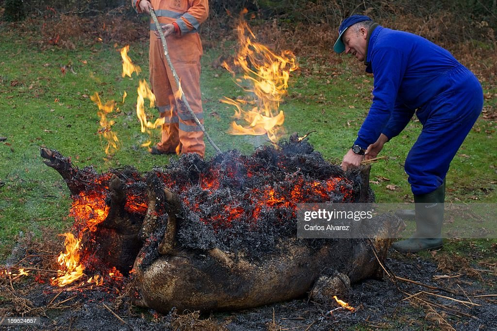 Once the animal has been killed, they use dry fern to burn the pig's skin in order to remove all fur/hair on January 11, 2013 in Hervas, Spain. It is a very common custom in Spanish villages for families to breed one or several pigs to later sacrifice them during the cold months in order to have a supply of meat and cold cuts for the rest of the year.