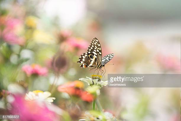 One butterfly stop on one flower on soft blurred background.