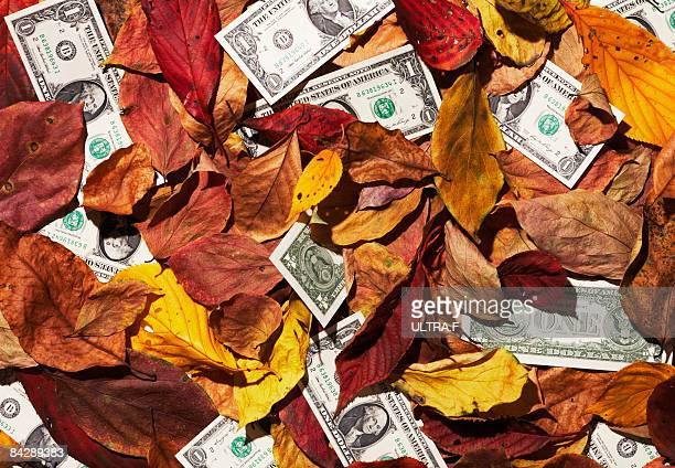 One dollar note that has mixed with fallen leaves