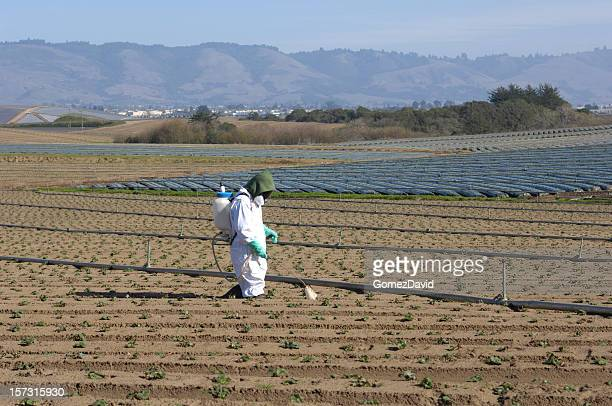 One Farm Worker in Protective Clothing Spraying Plant Seedlings