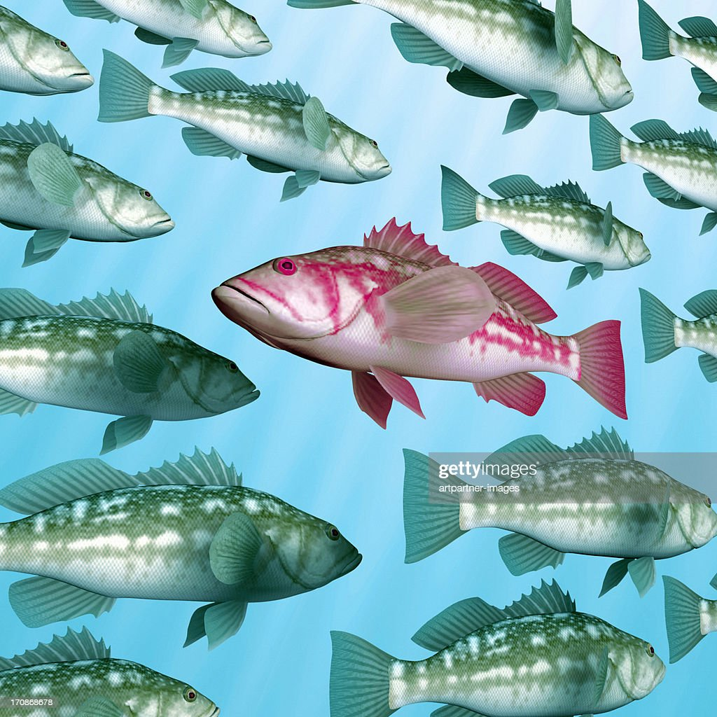 One fish is swimming against the stream : Stock Photo