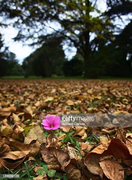 One flower in autumn