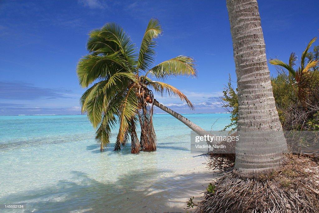 One Foot Island, Aitutaki lagoon : Stock Photo