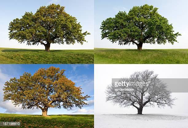 L'Oak-Four Seasons