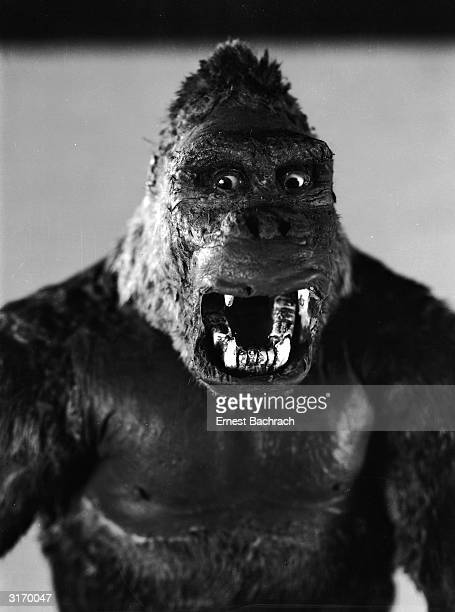 One of John Cerisoli's models of the giant ape hirsute star of the classic monster movie 'King Kong'