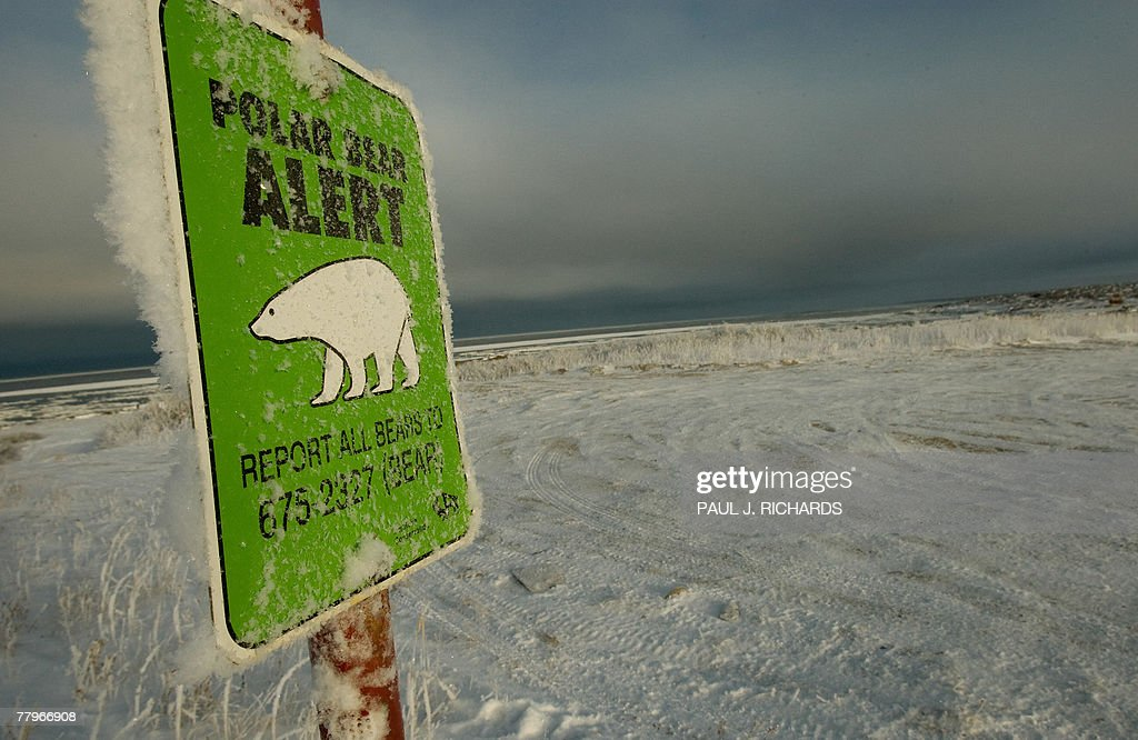 One of many polar bear alert warning signs posted inside the town of Churchill Manitoba Canada is frosted over 17 November 2007 at the edge of the...