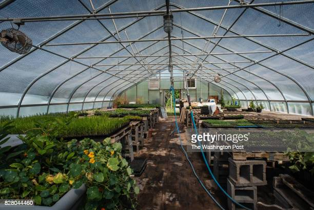 One of several greenhouses with seedlings for the farm The Willowsford development incorporates open space and agribusiness with suburban living As...