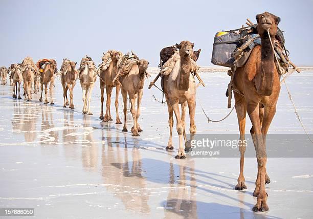 Uno de los últimos sal caravanas, Danakil Desert, Etiopía